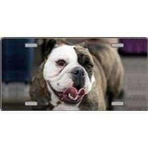 Bulldog Dog Pet Novelty License Plates Full Color Photography License