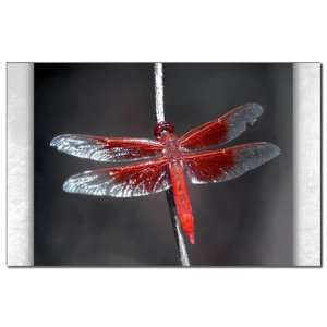 Mini Poster Print Red Flame Dragonfly